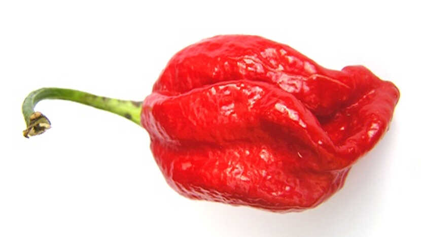 most spicy chilli